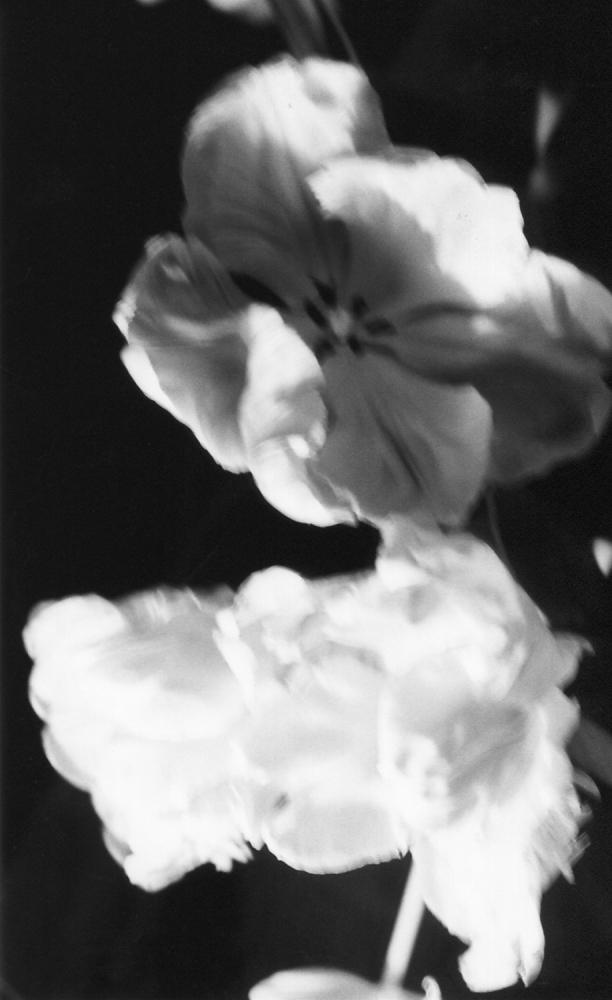 Illumination n°5 - 2011